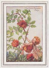 CICELY MARY BARKER c1930 ROBIN'S PINCUSHION FAIRY Painting Vintage Art BookPrint