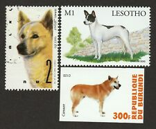 Canaan Dog * Int'l Dog Postage Stamp *Great Gift Idea*