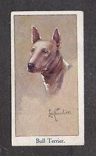 1924 UK Leo Chambers Dog Art Head Study Moustafa Cigarette Card WHT BULL TERRIER