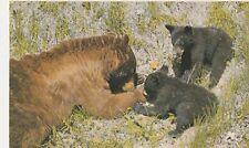 "*Postcard-""Black Bear & Cubs"" /Canadian Rockies/ (U1-654)"