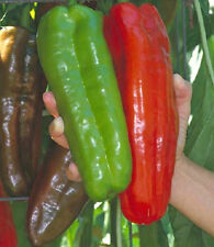 25 Pepper Seeds Giant Marconi Hybrid Sweet Pepper Seeds