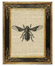 Bee Fly Art Print on Antique Book Page Vintage Illustration Garden Insects