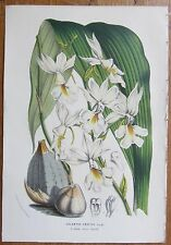 van Houtte: Garden Flowers Orchid Calanthe from Java - 1852#