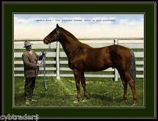Thoroughbred Race Horse Man O War Refrigerator / Tool Box / Magnet