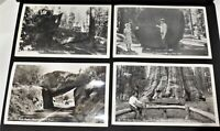 Vintage CA Sequoia National Park RPPC Postcard Lot Of 4 Old Cars People Trees