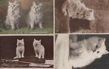Daughter Of The Squire Antique White Fluffy Cat s Old Violin 4x Antique Postcard