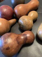 Lot 7 Gourds Bowl Filler Decorative Tabletop Natural Fall Autumn Thanksgiving