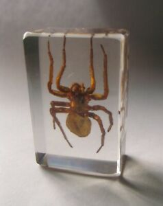 Spider Specimen in Glass Block Paperweight Scary Oddities Desk Decor S
