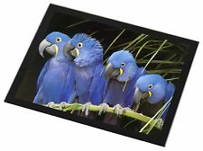 Hyacinth Macaw Parrots Black Rim Glass Placemat Animal Table Gift, AB-PA1GP