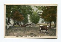 Postcard - Greetings from Ulster Heights NY Artino Postcard Co 1914 - Farm Cows