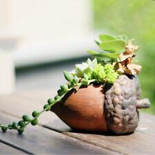 Resin Garden Flower Herb Planter Succulent Pot Box Hazelnut Plant Bed Case