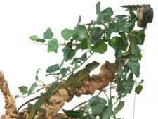 Magnatural Small Mushroom Ledge PT-1400 Bearded Dragon Crested Gecko Reptile ...
