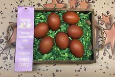 6 + 4 Extra Apa Standard, Blue, and Splash Wheaten Marans Hatching Eggs