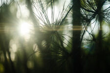 Helios 44-2 lens with anamorphic oval bokeh & flare streaks