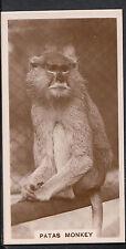 Cigarette Card - J.Millhoff - Zoological Studies - No 3 - Patas Monkey  A11