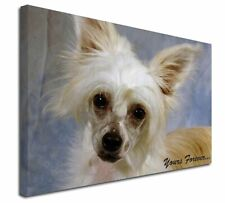 More details for chinese crested powder puff dog x-large 30
