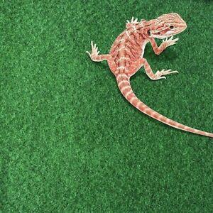 Moisturizing Reptile Carpet Green Fiber Mat for Bearded Dragons Tortoise