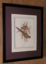 J Gould stampa vintage, Gould Incorniciato Wall Art - 20''x16'' telaio, esotico Bird ART