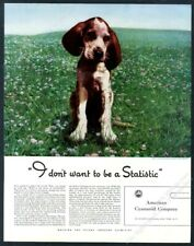 1941 german shorthaired pointer puppy photo American Cyanamid vintage print ad