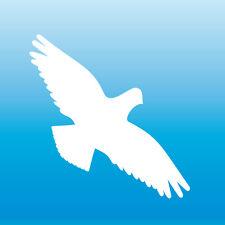 Warnvogel Aufkleber 13cm weiß Habicht Vogel Schreck Fenster Schutz Deko Folie