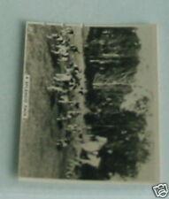 #11 Fox/hare hunting pack dan riddiford Sport cig card