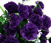 CARNATION GRENADIN KING OF BLACKS Dianthus Caryophyllus - 200 Bulk Seeds