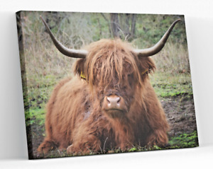 HIGHLAND COW CATTLE CANVAS PICTURE PRINT WALL ART D53