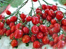 Dwarf Tomato Seeds - GERANIUM KISS - 20 Heirloom Vegetable Seeds-Multiflora Type