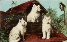 Cats - Fluffy White Kittens Watching Bird c1910 Tinted Real Photo Postcard rpx