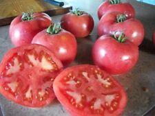 Tomate ancienne rose de Berne 30 graines  jardin Bio Bretagne graines paysanne l