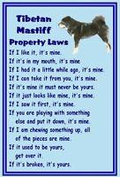 Tibetan Mastiff - New - Dog fridge magnets New Gift - Free UK p/p