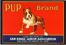 STAFFORDSHIRE AMERICAN BULL TERRIER ADVERTISING CRATE LABEL DOG ART POSTCARD