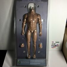 Kaustic Plastik Heroik Muscle Body 1/6 Scale CAUCASIAN KP02
