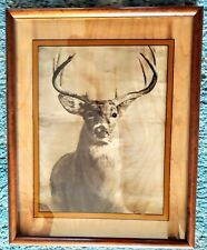 """Dennis Curry,Photographic Print Art, Signed on Glass,Deer Stag,Framed 17""""×21"""""""