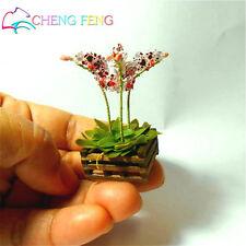 100 Pcs Mini Bonsai Orchid Seeds Indoor Home Miniature Flower Plants Pot