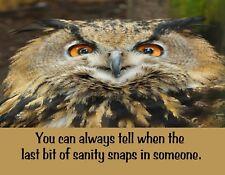 METAL FRIDGE MAGNET Eurasian Owl Always Tell When Sanity Snaps Humor Bird