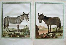 2 Antique Buffon Donkey Prints: Hand Colored Donkey Engravings: Paris 1786