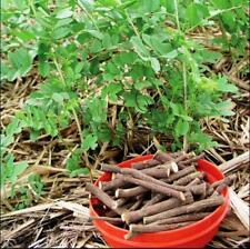 50pcs Glycyrrhiza uralensis Fisch  Licorice Chinese herb seeds