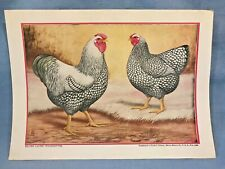 White Cornish by L A Stahmer 1928 Poultry Tribune Supplement Reprint