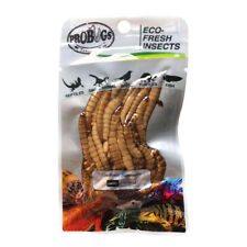 Probugs Superworms insect feeders for Turtles, Frogs, Koi, Large Cichlids