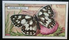 Marbled White  Butterfly   Original  Vintage Colour Card # VGC