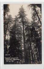 TALLEST KNOWN TREE, REDWOOD HIGHWAY: California USA postcard (C30179)