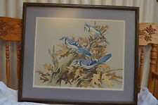 VTG. 1976 ROGER TORY PETERSON, LITHOGRAPH BLUE JAYS  #610/950 32.5 x 27.5 x 2