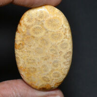 Cts. 45.50 Natural Designer Coral Fossil Cab Oval Cabochon Loose Gemstone