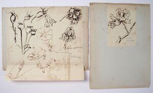 Richard Suter (Architect 1797–1883). Botanical illustrations, Bromley, Aug 1847