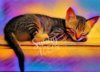 Tiger Kitten Cat ACEO Print Baby kitty animals digital original rainbow sleeping