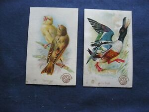 Victorian Trade Card Arm& Hammer Weller Duck #4 Canaries #29 BEAUTIFUL Birds 80