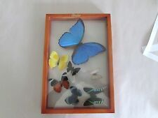 vintage mounted butterfly's framed