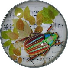 Crystal Dome Button Green Bug on Leaf wPaper  BUG-12 FREE US SHIPPING