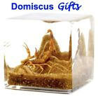 """2"""" New! REAL Brown SCORPION Insect CUBE Paperweight OFFICE Desk Gift ARACHNID"""